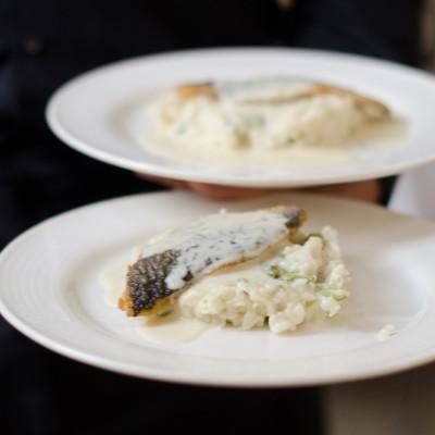 zeebaars met risotto